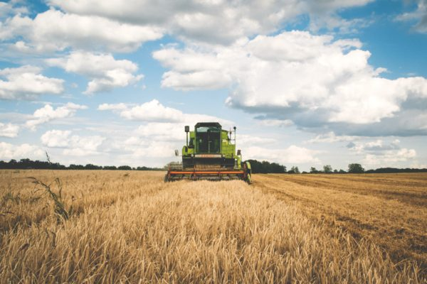 A machine harvesting wheat on a farm.